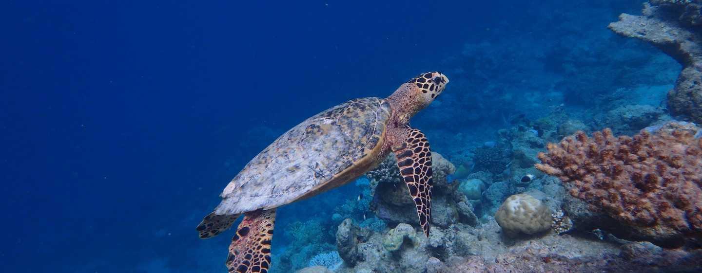 Conrad Maldives Rangali Island Hotel, Malediven – Unterwasserwelten