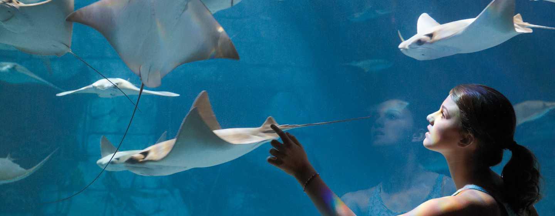 Hotel DoubleTree by Hilton Orlando at SeaWorld, Florida - Manta Aquarium