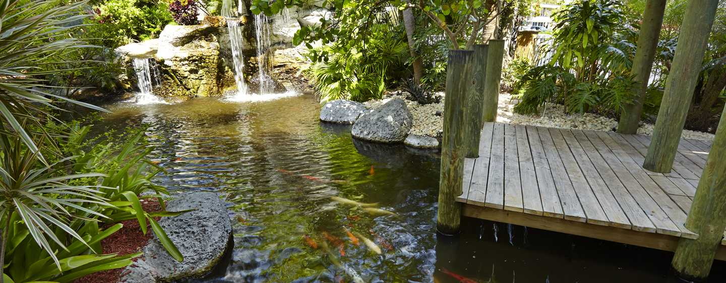 Embassy Suites Fort Lauderdale - 17th Street, USA - Lago tropical de carpas ornamentais