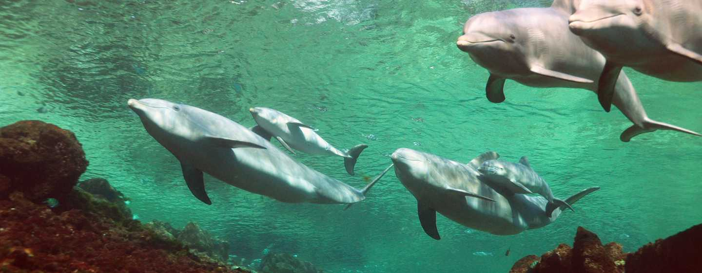 Hilton Waikoloa Village Hotel, Hawaii, USA – interaktives Programm Dolphin Quest