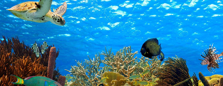 Nagez avec les tortues à la Barbade
