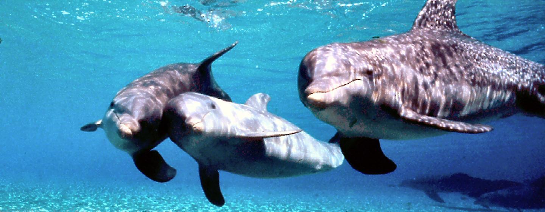 Hilton Waikoloa Village - Interaktives Programm Dolphin Quest