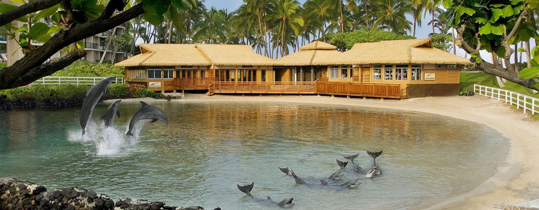 Beobachten oder schwimmen Sie, beaufsichtigt von Experten, mit Delfinen